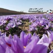 زعفران اصل و مشخصات زعفران